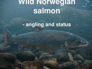 Wild Norwegian salmon - angling and status