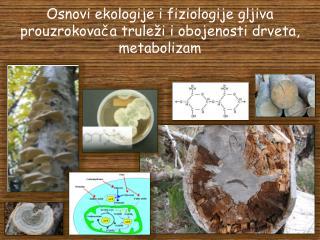 Osnovi ekologije i fiziologije gljiva prouzrokovača truleži i obojenosti drveta, metabolizam