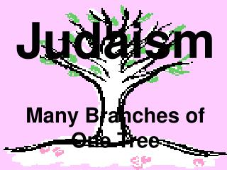Judaism Many Branches of One Tree