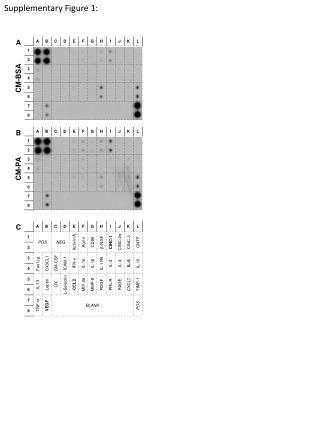 Supplementary Figure 1: