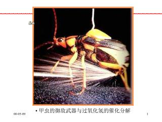 甲虫的御敌武器与过氧化氢的催化分解