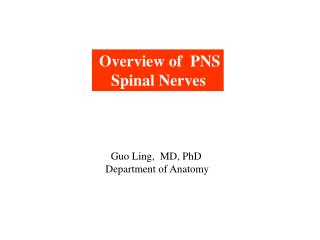 Overview of  PNS     Spinal Nerves