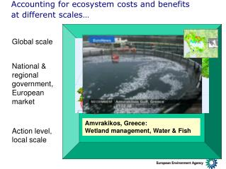 Accounting for ecosystem costs and benefits  at different scales…