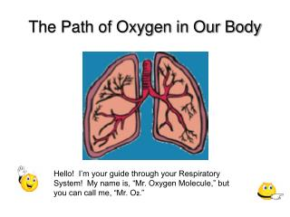 The Path of Oxygen in Our Body