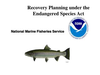 Recovery Planning under the Endangered Species Act