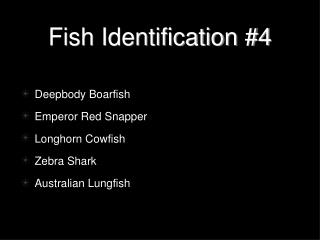 Fish Identification #4