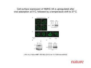J Arii  et al. Nature 467 , 859-862 (2010) doi:10.1038/nature09420