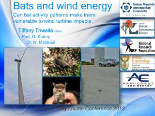 Bats and wind energy Can bat activity patterns make them vulnerable to wind turbine impacts
