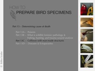 nmnh.si/BIRDNET/documents/WNV&H5N1-FactSheet.pdf