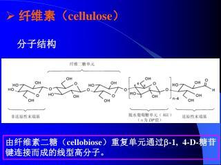 纤维素( cellulose )