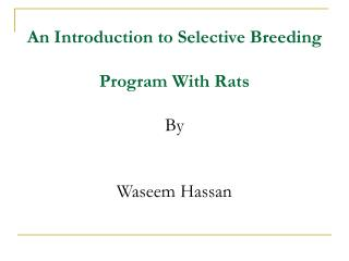 An Introduction to Selective Breeding  Program With Rats By  Waseem Hassan