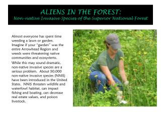 ALIENS IN THE FOREST:  Non-native Invasive Species of the Superior National Forest