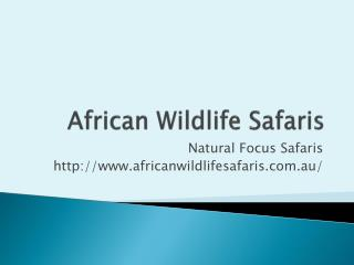 African Wildlife Safaris and Tours