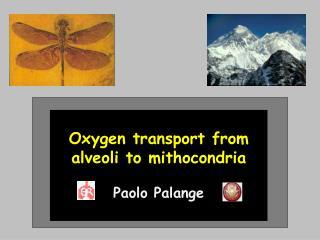 Oxygen transport from  alveoli to mithocondria Paolo Palange