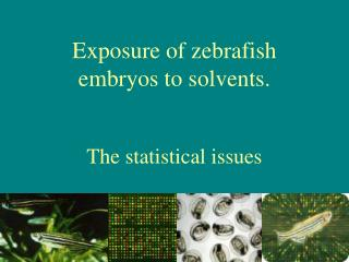 Exposure of zebrafish embryos to solvents. The statistical issues