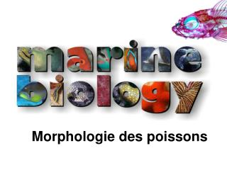 Morphologie des poissons