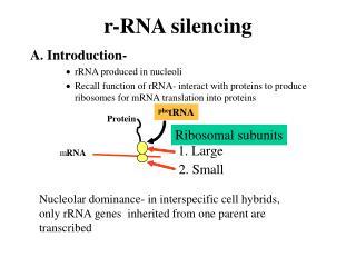 r-RNA silencing