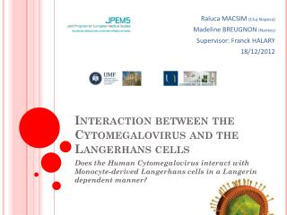 Interaction between the Cytomegalovirus and the Langerhans cells