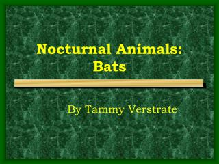 Nocturnal Animals: Bats