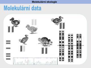 Molekul ární ekologie