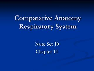 Comparative Anatomy Respiratory System