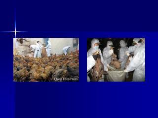 第九章 法定动物疫病
