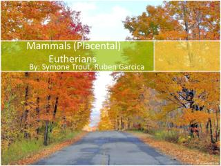 Mammals (Placental) Eutherians