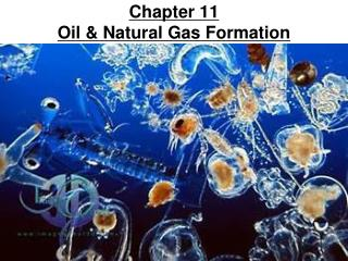 Chapter 11 Oil & Natural Gas Formation