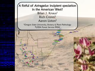 A fistful of  Astragalus : incipient speciation in the American West? Brian J. Knaus 1