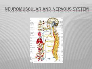 Neuromuscular AND Nervous system