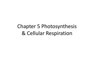 Chapter 5 Photosynthesis  & Cellular Respiration
