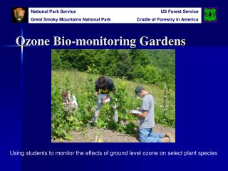 Ozone Bio-monitoring Gardens