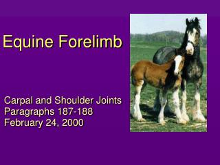 Equine Forelimb