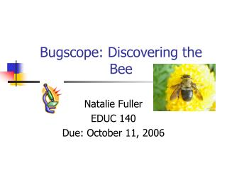 Bugscope: Discovering the Bee