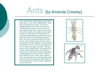 Ants [by Amanda Crowley]
