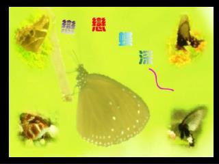大家好 ! 我叫黑鳳蝶 我身上大部份都是黑色 的喔 !
