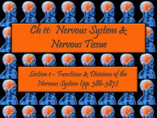 Ch  11:  Nervous System & Nervous Tissue