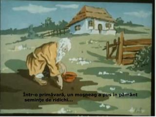 Într-o primăvară, un moşneag a pus în pământ  seminţe de ridichi...