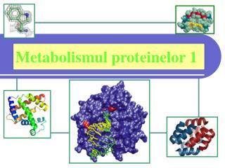 Metabolismul proteinelor  1