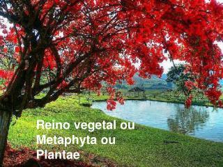 Reino vegetal ou Metaphyta ou Plantae