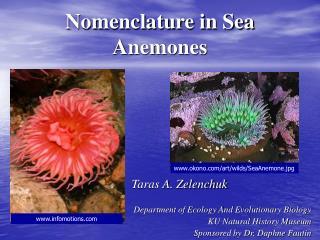 Nomenclature in Sea Anemones