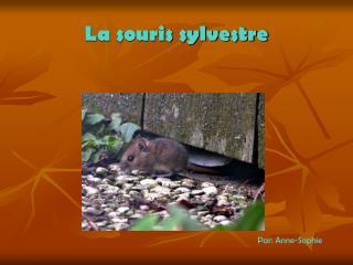 La souris sylvestre