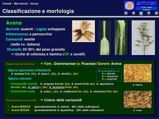 Classificazione e morfologia