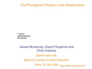 The Phylogenetic Position of the Mitochondrion