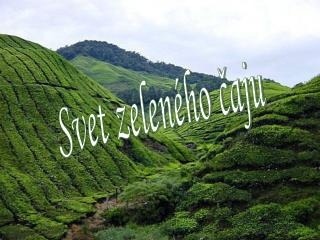 Svet zeleného čaju