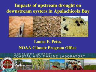 Impacts of upstream drought on downstream oysters in Apalachicola Bay