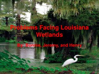 Problems Facing Louisiana Wetlands