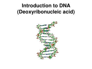 Introduction to DNA (Deoxyribonucleic acid)