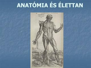 ANATÓMIA ÉS ÉLETTAN