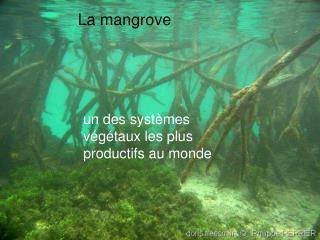 un des systèmes végétaux les plus productifs au monde